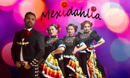 Mexidahlia